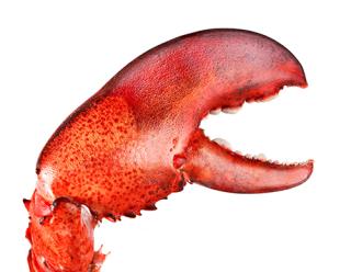 Lobster500
