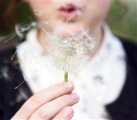 Dandelion Show Image